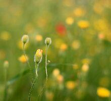 spring in the wild by Peetjohn