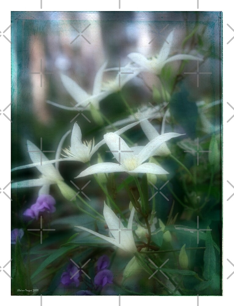 Wild Clematis by Elaine Teague