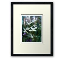 Wild Clematis Framed Print