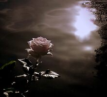 If life is a rose, Love must be her seeker by Brian Bo Mei