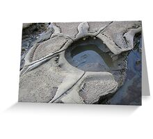 Turtle Rockpool, Long Bay to Pohutukawa Bay Greeting Card