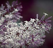 Scent From Heaven by Debbie-Anne Parent