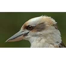 Kookaburra at Sherbrooke IV Photographic Print