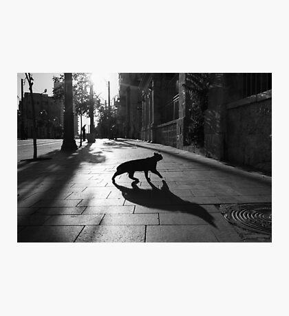 the animal Photographic Print