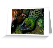 Fimbriated Moray Eel Greeting Card