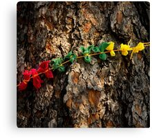 Prayer Cloths on a Tree in Devils Tower National Monument  Canvas Print