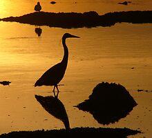 heron by Jef Poskanzer