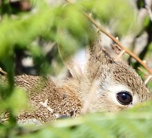 Baby Rabbit by DEB VINCENT