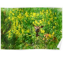 Wapiti and Flowers Poster