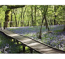 Boardwalk in the bluebells Photographic Print