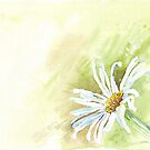 One Spider-Daisy by Maree Clarkson
