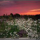 Wild Flowers And Purple Skys by Linda Miller Gesualdo