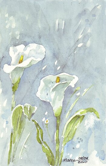 Arum Lilies at night by Maree  Clarkson