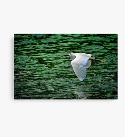 Flying Over Green Water Canvas Print