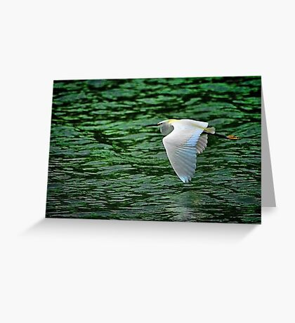 Flying Over Green Water Greeting Card