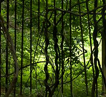 Gated Forest  by Jason Lee Jodoin