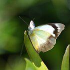 Butterfly Wings in the Morning by KiLLJ0Y