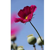Flower against a blue sky Photographic Print