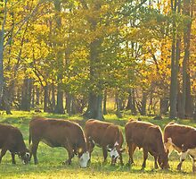 Synchronized Grazing_1 by sundawg7