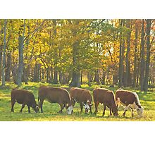Synchronized Grazing_1 Photographic Print
