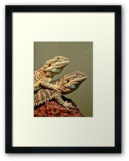 Basking Dragons  by Steven  Agius