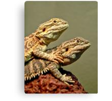 Basking Dragons  Canvas Print