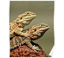 Basking Dragons  Poster