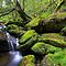 MOSS & Algae - (Canon EOS images only)