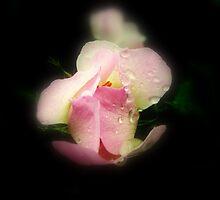 Rainy Day Wildflower by Stan Owen