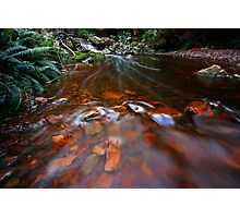 """Down Stream"" Photographic Print"