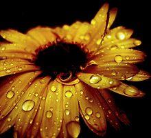 night flower by casey diamond