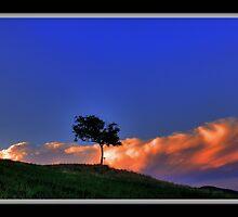 Albero di noce al tramonto, Montecorone - ( zocca modena italy )_1756_ by primo masotti