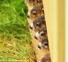 Hey,hey!!We are watching you,,,, by Gary Boudreau