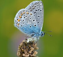 Small Butterfly On Flower by jnmayer