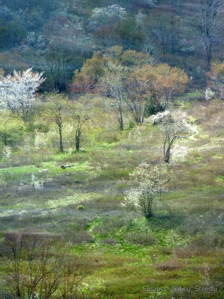 Graveyard Fields Spring by Tibby Steedly