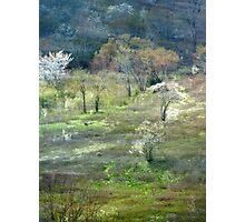 Graveyard Fields Spring Photographic Print