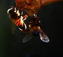 Trasparenza,,api al lavoro - Missano - (zocca modena italy)_4164 by primo masotti