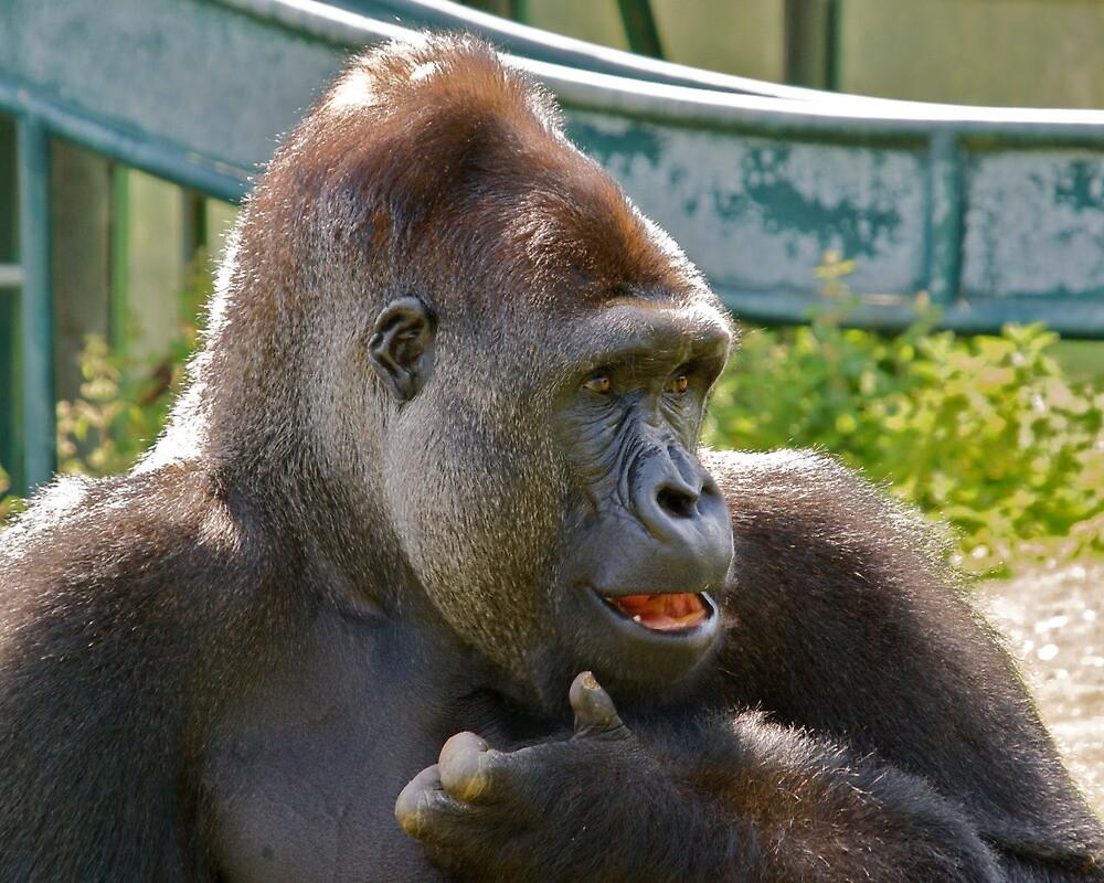Portrait of a Gorilla by John Thurgood