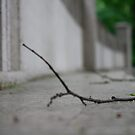 Lonely twig by Thomas Mundy
