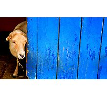 Someone at the Door Photographic Print