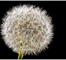 Shhmoking Dandelion by Chrissie Taylor