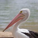 Pelican on a Mission by Nathan Borg