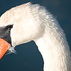 Heads up Mute Swan. by Mark  Humphreys
