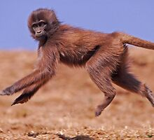 Jumping young gelada by Marieseyes