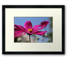 pink&yellow against blue Framed Print