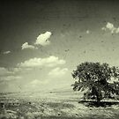 An old Nebraska tree by Mike Olbinski
