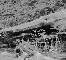 Driftwood Gator by RHunter