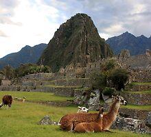 llamas of machu pichu by gruntpig