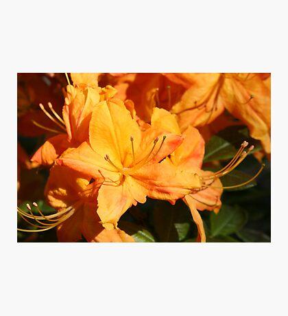 Orange Flower Close Up Photographic Print