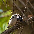 Red-breasted Nuthatch - chicks take a snooze by Joy Danen